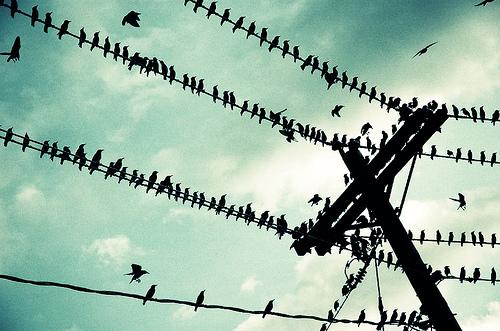 Птицы на проводах под напряжением