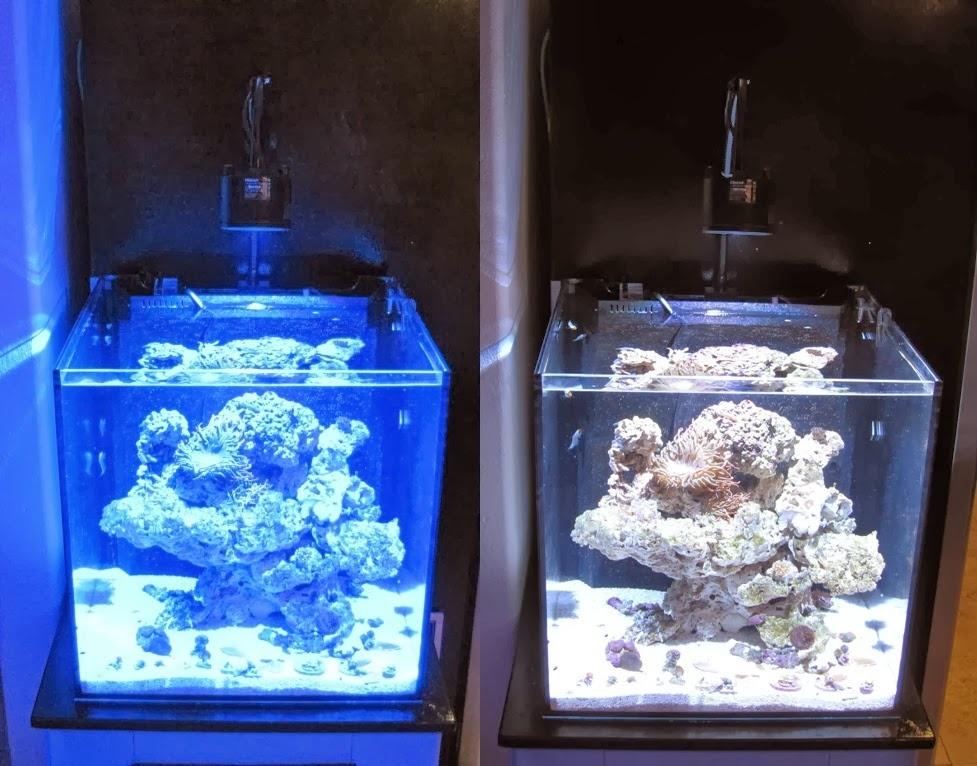 Использование разноцветных линз в светодиодных прожекторах. От смены спектра, полностью меняется визуальное восприятие