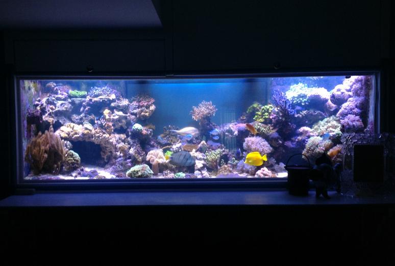 Аквариум со скрытой подсветкой, выполненной при помощи светодиодных лент