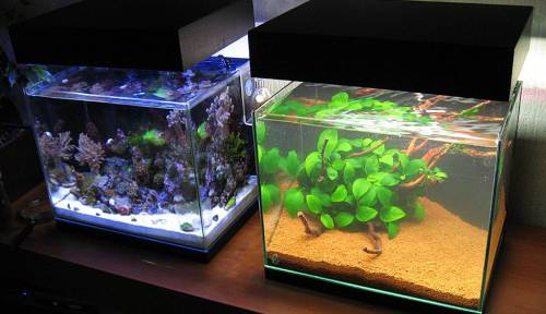 Создание разной атмосферы в аквариуме, при помощи светодиодов разных цветов