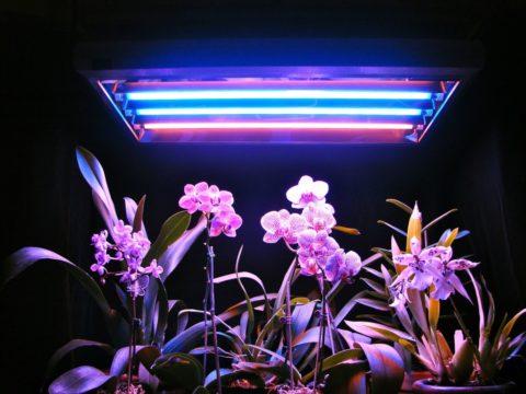 Освещение растений видимым ультрафиолетом из люминесцентной лампы