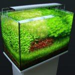 Освещение для аквариума с растениями: создаем настоящую мини вселенную