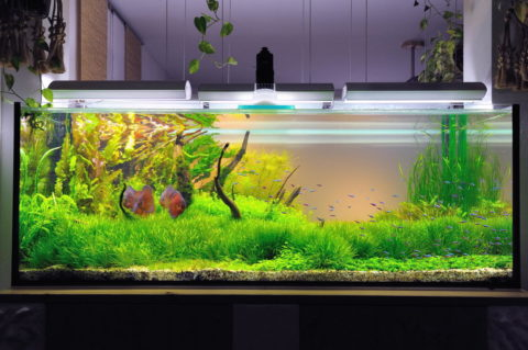 Освещение для растений аквариумаподобрано оптимально