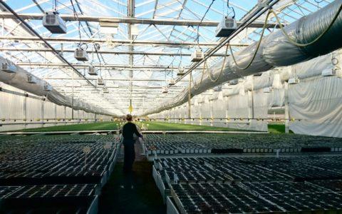 Освещение растений в теплице с помощью светодиодных источников света
