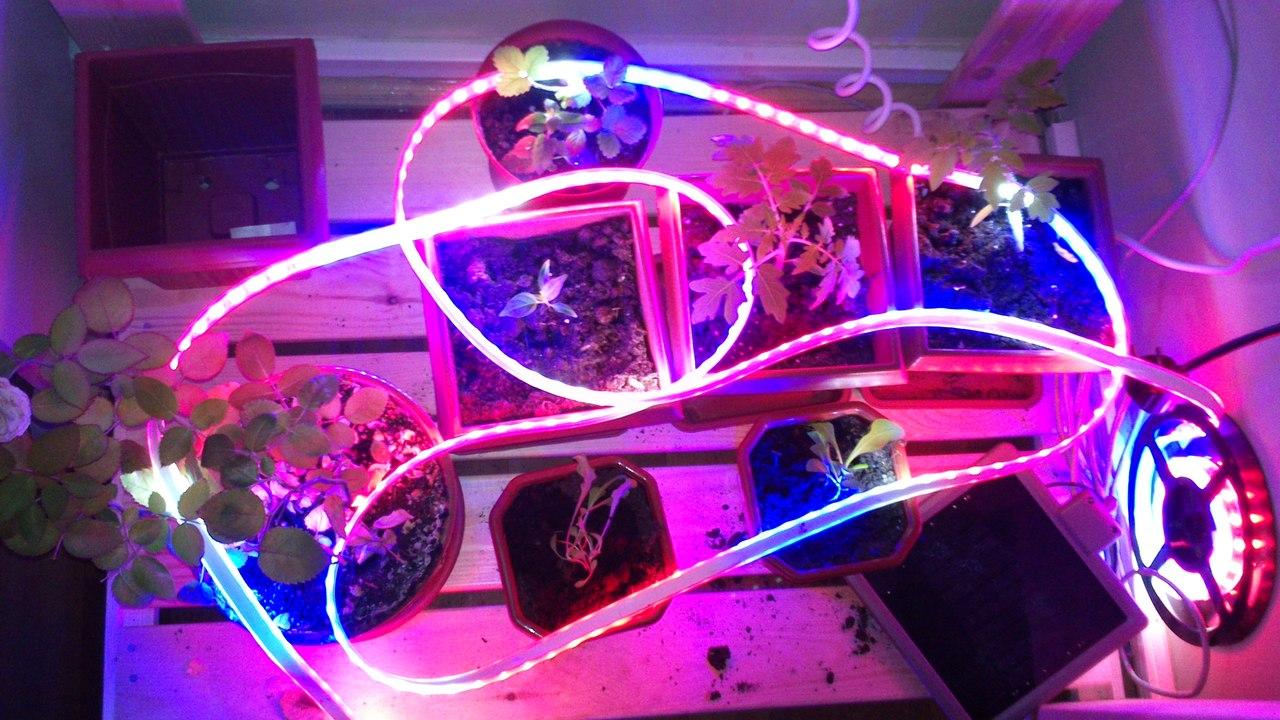 LED-ленты