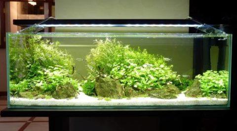 Светодиодные лампы над аквариумом