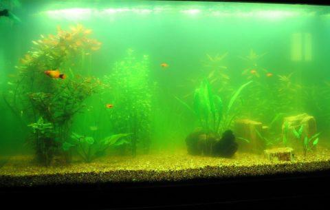 Такая среда может быть неблагоприятна для аквариумных рыб, да и красоты тут не наблюдается