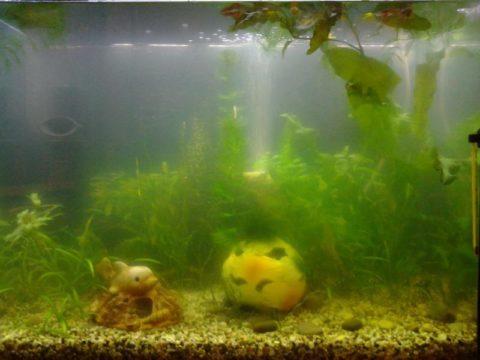 Такой аквариум кажется необитаемым