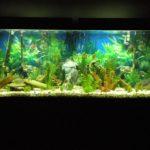 Ухоженный аквариум с подсветкой