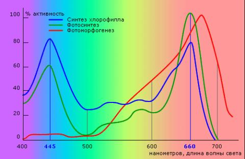 Влияние светового спектра на фотосинтез в растениях