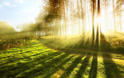 Утренний солнечный свет является желтоватым