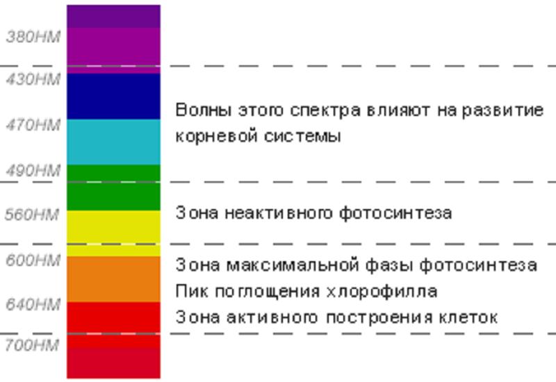 Влияние разных спектров излучения на развитие растений