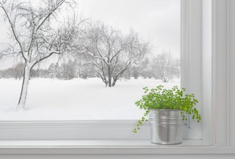 Интенсивность света на северных окнах не бывает высокой