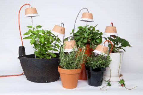 Свет – важнейшее условие для жизни растений