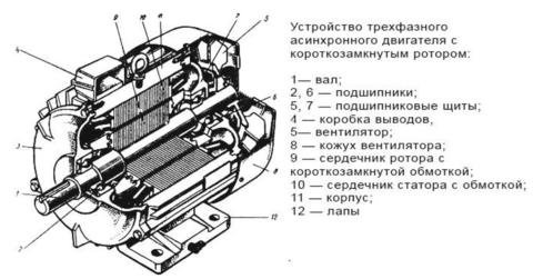 Схема строения трехфазного асинхронного двигателя