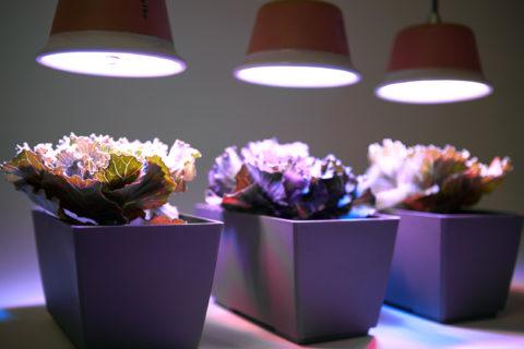 Без света процесс фотосинтеза не запустится