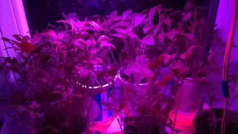 Диодное освещение для комнатных цветов