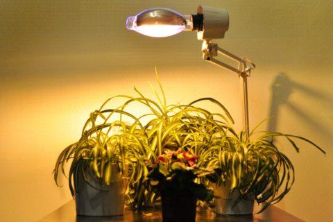 Дополнительное освещение комнатных цветов