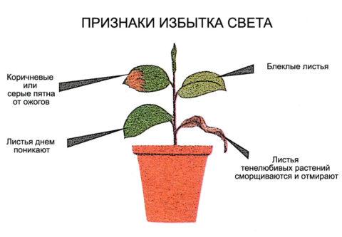 Как определить по внешнему виду растения переизбыток света