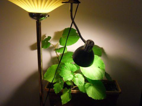 Лампа накаливания для создания искусственного освещения