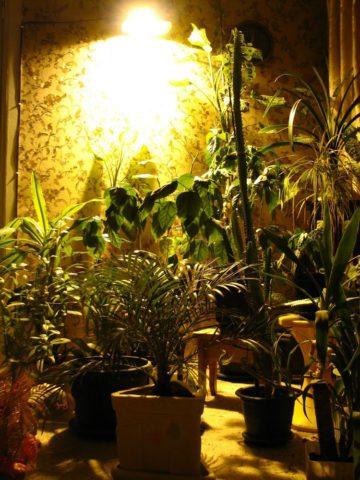 Организация освещения при помощи натриевой лампы