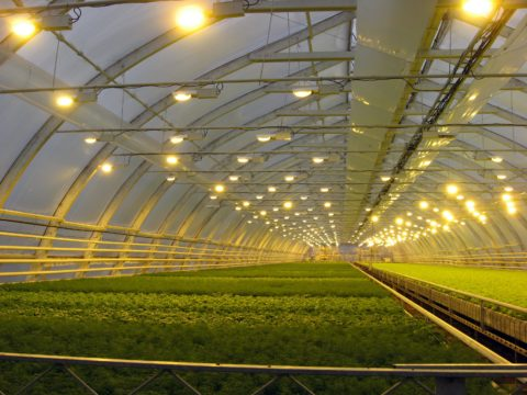 Освещение большого комплекса по выращиванию растений