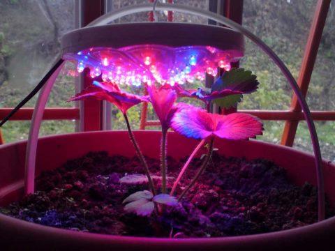 Подсветка, расположенная над растением