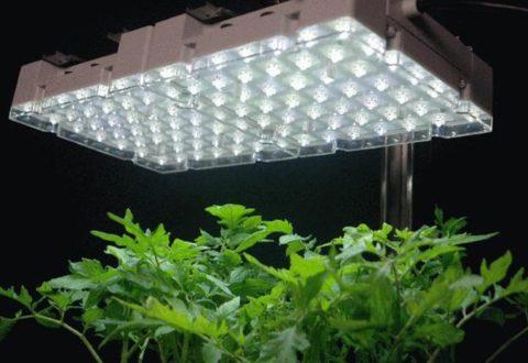 Подсветка растений светильником из белых светодиодов