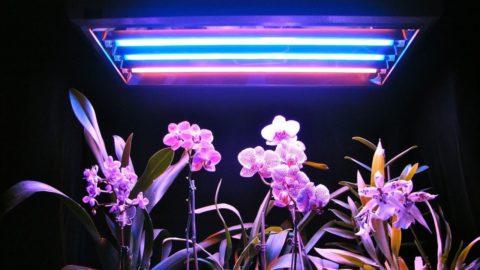 Правильно подобранный свет раскроет всю красоту ваших растений