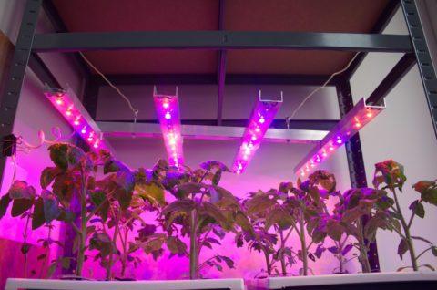 Растения располагаются однотипными группами