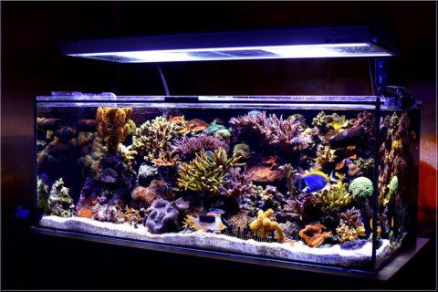 Богатый аквариум, освещенный для его обитателей