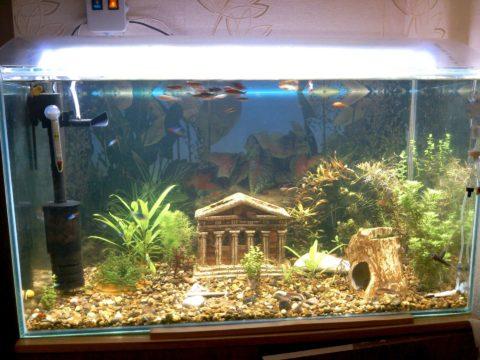 Для аквариума освещение обычно располагают сверху