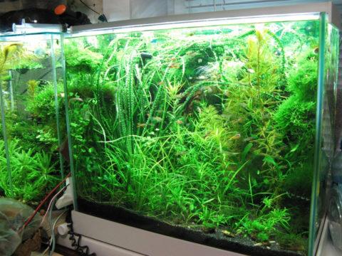 Глубокому аквариуму нужно более яркое освещение