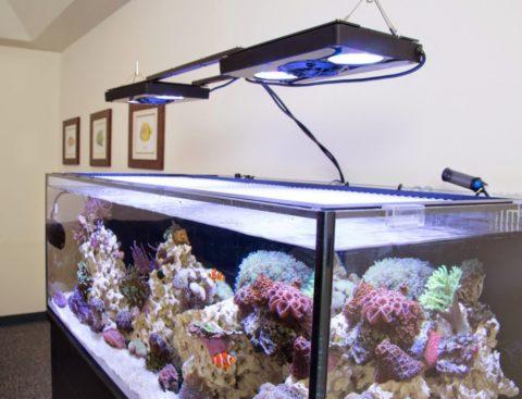 Насыщенный аквариум и хорошее освещение