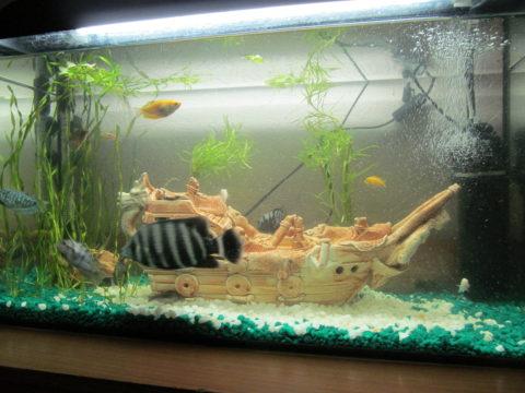 Небольшой аквариум осветить несложно