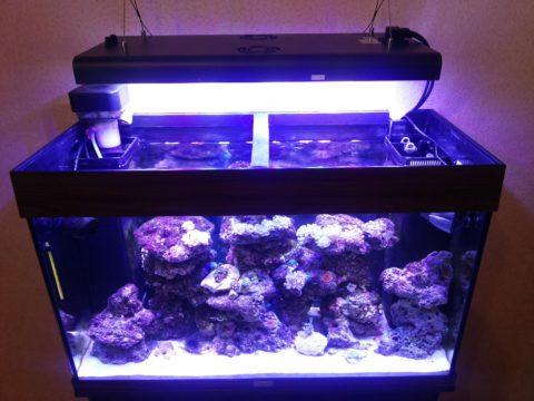 Подвесной светильник над аквариумом.