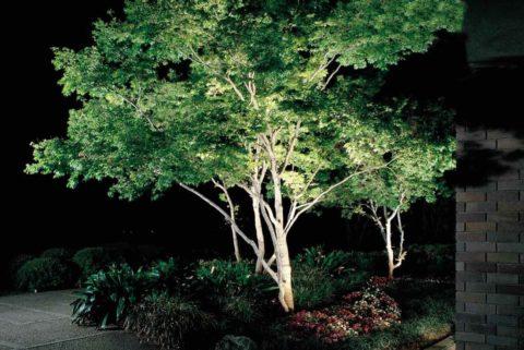 Ландшафтное светодиодное освещение с акцентом на деревьях