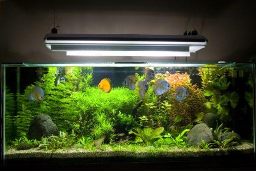 Подсветка аквариума лампой дневного света